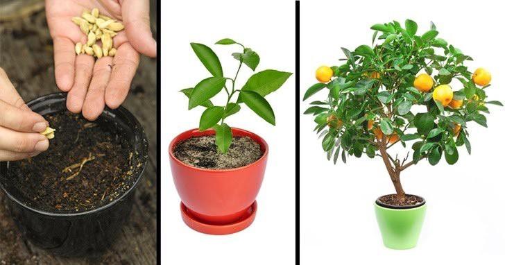 کاشتن گیاهان با استفاده از هسته آنها